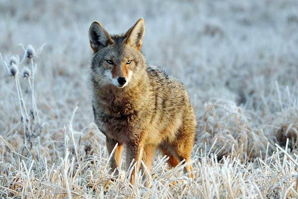 Кто живет в северной америке из животных