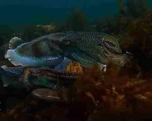 Древние моллюски