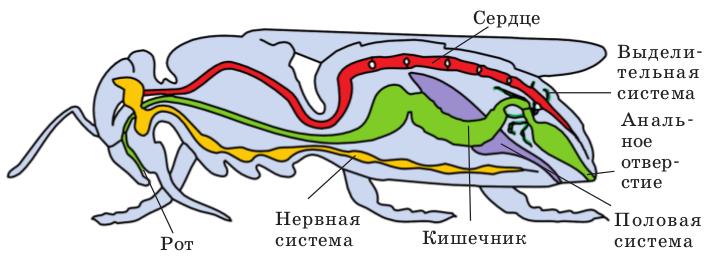 Зрение членистоногих