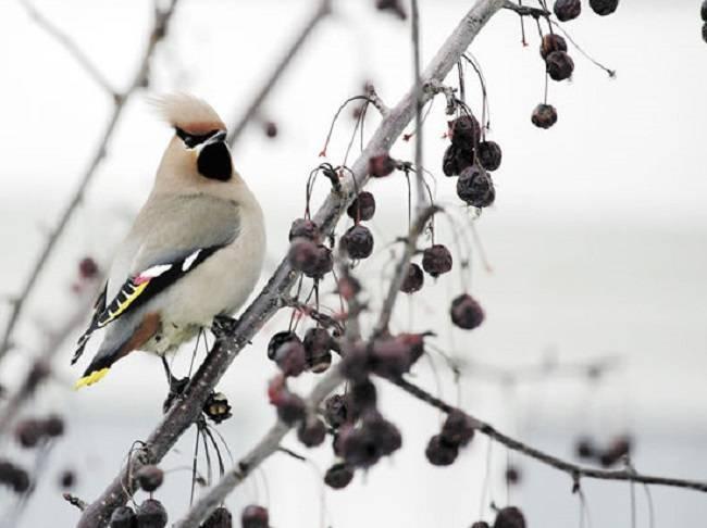 Куда улетают птицы осенью