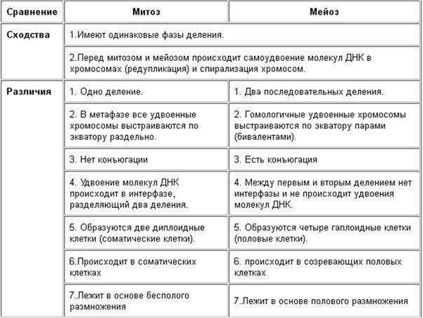 Формулы митоза и мейоза