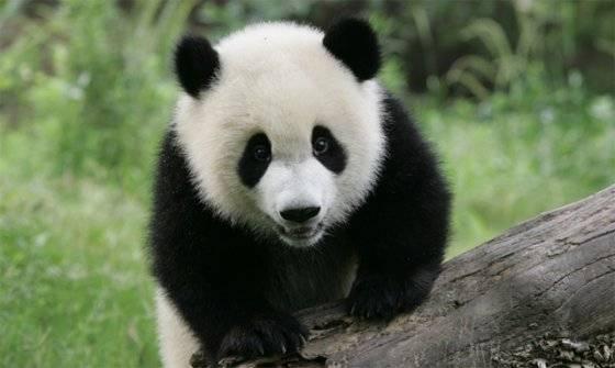 Исчезновение видов животных и растений