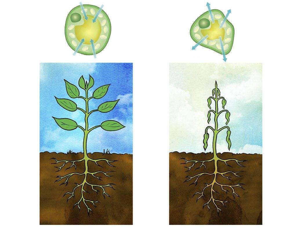 При фотосинтезе у зеленых растений