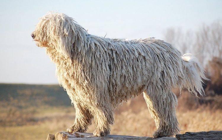Собаки белого цвета
