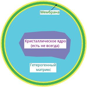 Пероксисома строение и функции