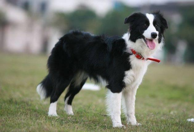Самые классные породы собак