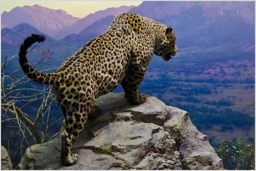Красный ягуар фото
