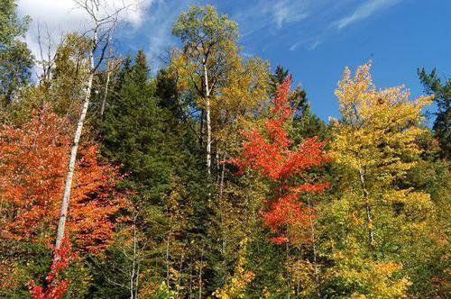 Климат смешанных лесов в россии