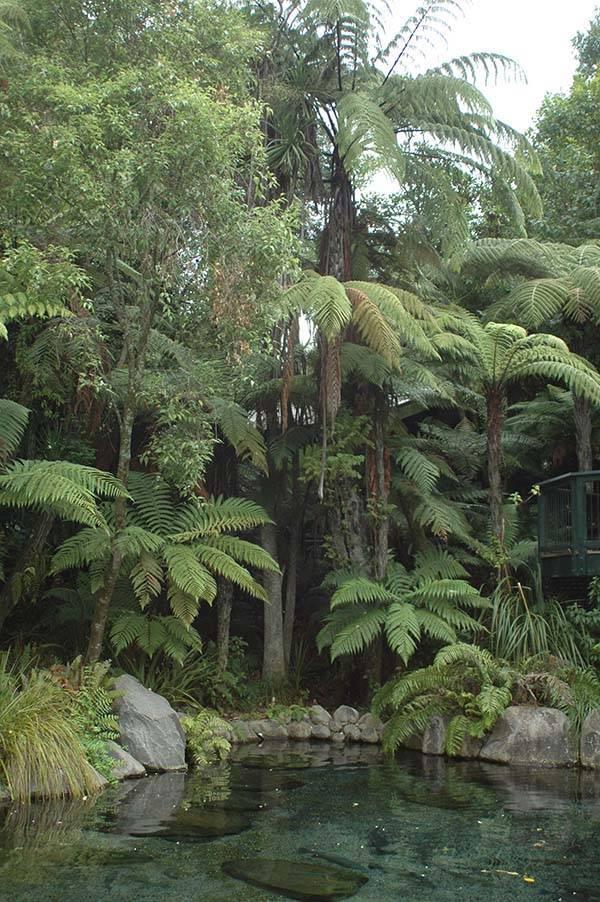 Где находятся тропические леса