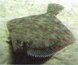 Планктон қазақша