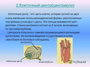 Центросома строение и функции