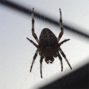 К какому типу относятся пауки