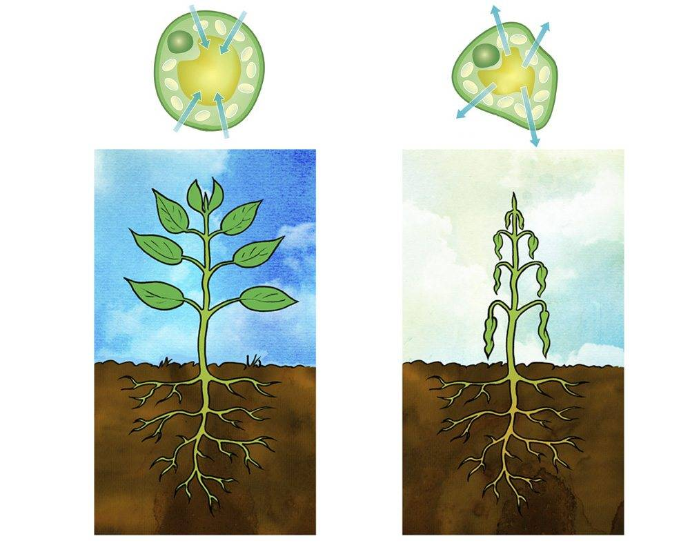 Охарактеризуйте сущность процесса фотосинтеза