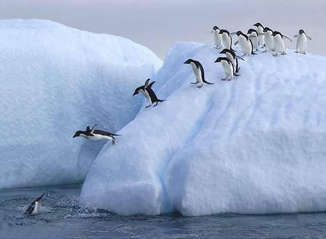 Чем питаются пингвины в антарктиде