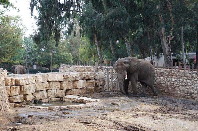 Самые большие слоны