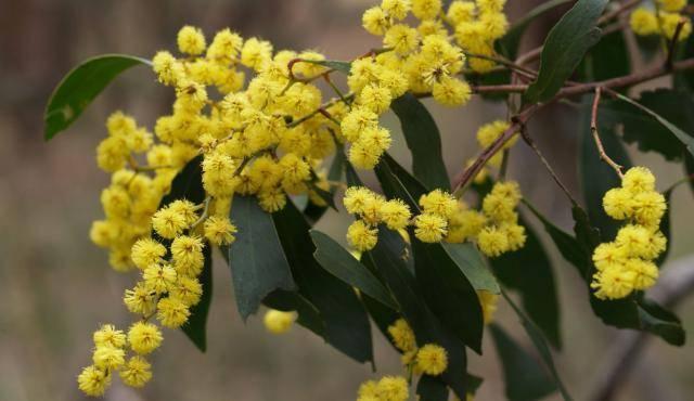 Наиболее характерный представитель флоры австралии 6 букв