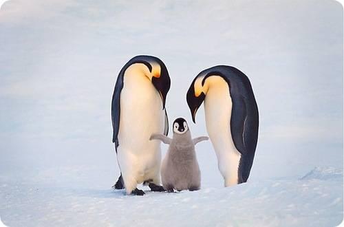 Мамы животные