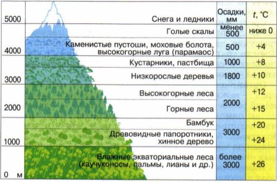 Зоны высотной поясности