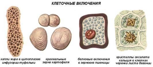 Органоиды общего назначения