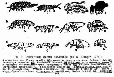 Наземні тварини приклади