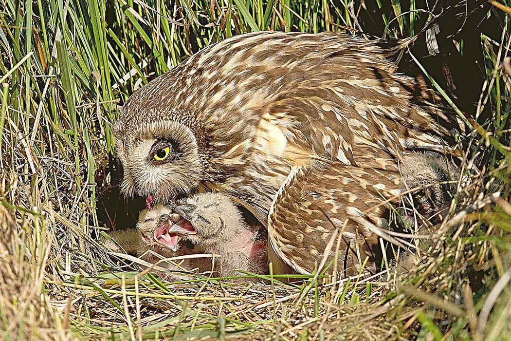 Информация о сове для детей