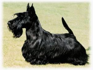 Мелкие породы собак фото и названия