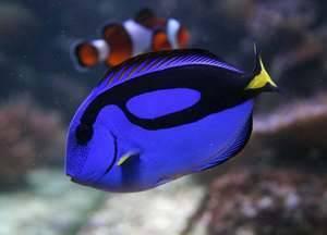 Самые необычные рыбы в мире фото