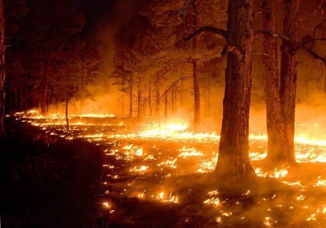 Сообщение на тему лесные пожары