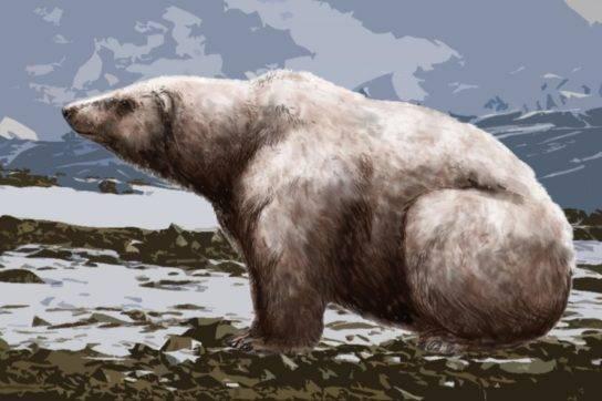 Медведь к какому виду относится