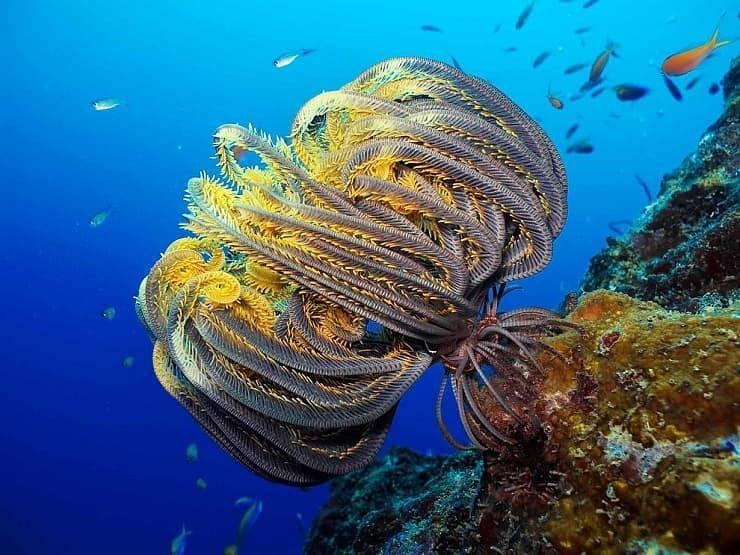 Тип иглокожие класс морские лилии