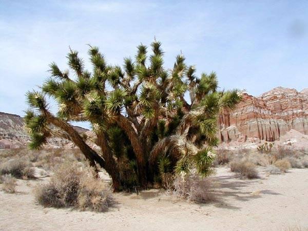 Растения зоны пустынь россии