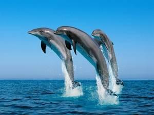 Какие рыбы млекопитающие