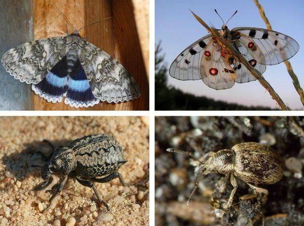 Исчезнувшие виды животных и растений