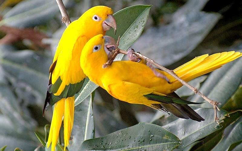 Попугаи долгожители
