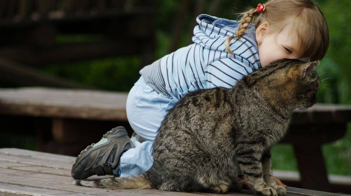Кошки которые любят детей