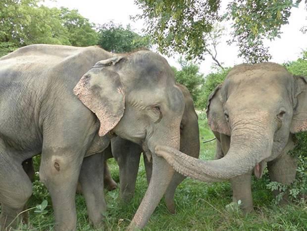 В какой природной зоне обитают слоны
