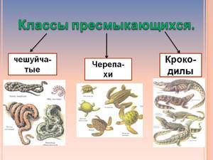 Названия рептилий