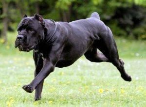 Самые опасные собаки для человека
