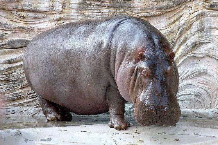 Интересные животные мира фото и их названия