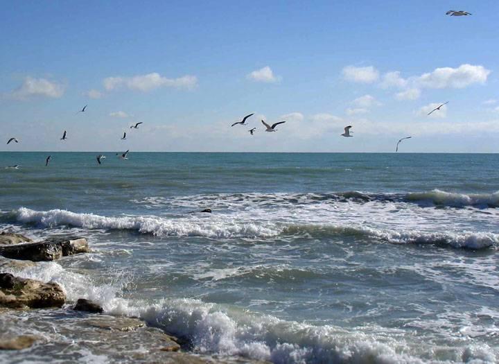 Моря каких океанов омывают берега нашей страны