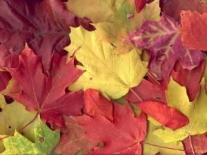 Почему листья меняют цвет осенью