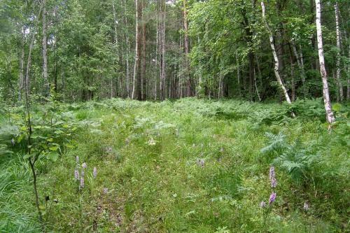 Хвойно широколиственные леса