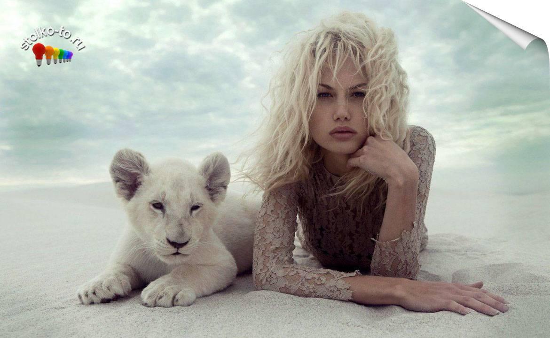 Высота льва