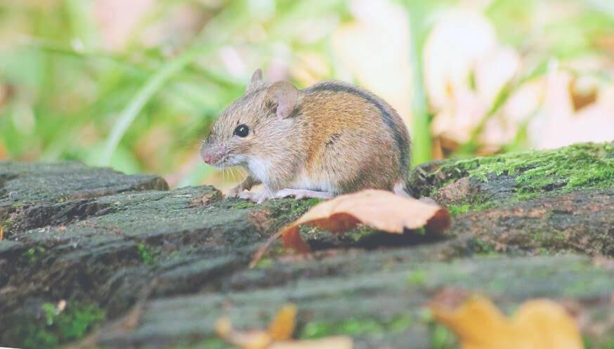 Мышь всеядная или нет