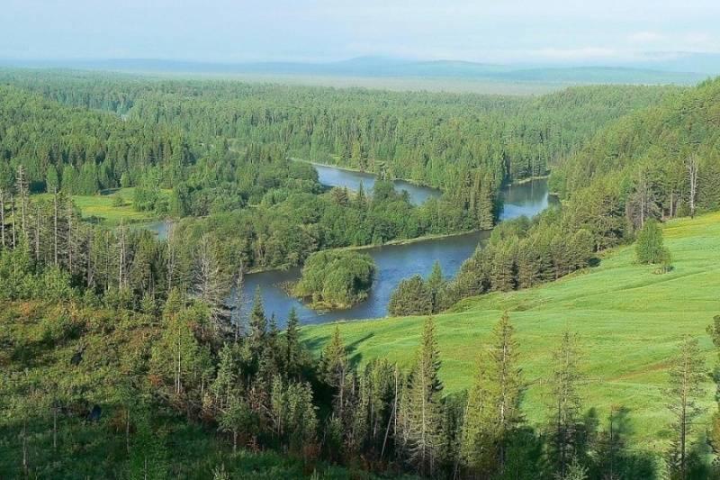 Площадь лесов в мире