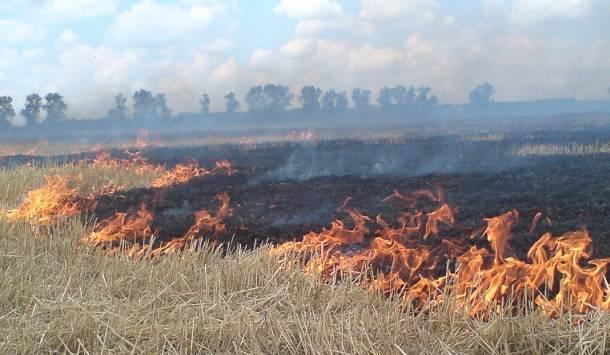 Последствиями лесных пожаров являются