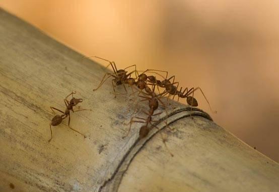 Сообщение о муравьях для 7 класса