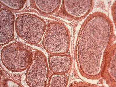 Где расположены хлоропласты в растительной клетке