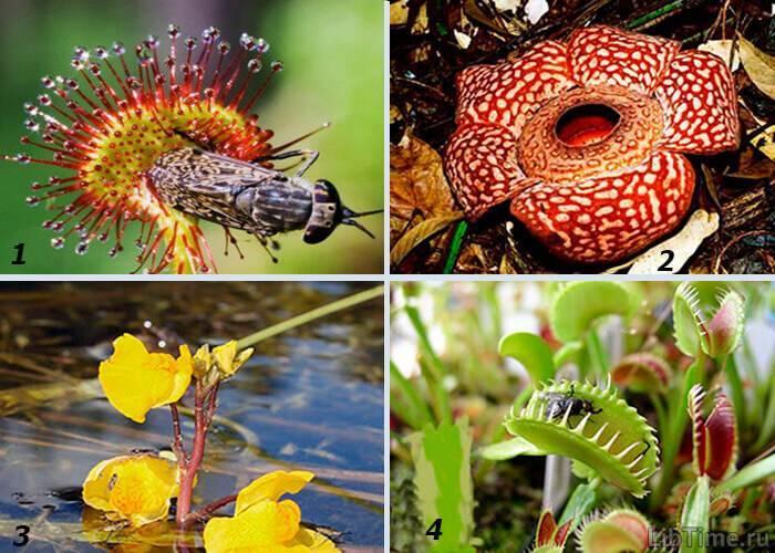 Организмы питающиеся растительной пищей называются