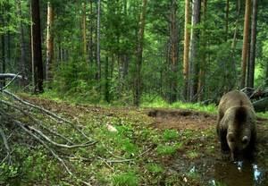 Географическое положение природной зоны тайги